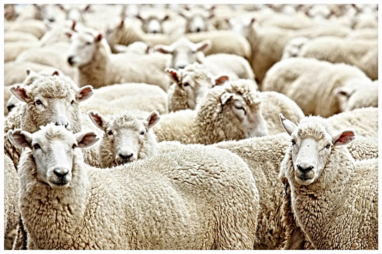 Agriculture Blog: شروط دعم تربية المواشي