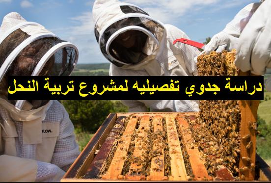 دراسة جدوى مشروع منحل عسل
