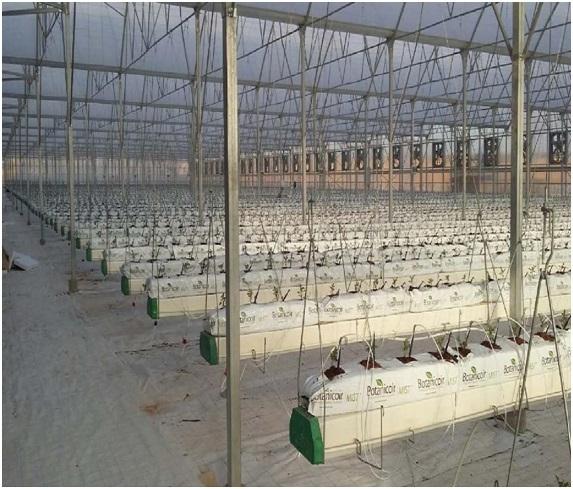 دراسة جدوى مشروع الصوبة الزراعية