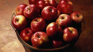 دراسة جدوى استيراد مواد غذائية